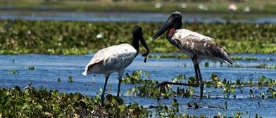 wildlife sanctuary in belize