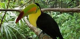 toucan zoo